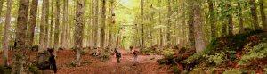 Monte Amiata Forest, Maremma Tuscany