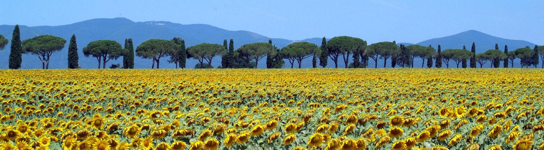 Maremma Tuscany countryside