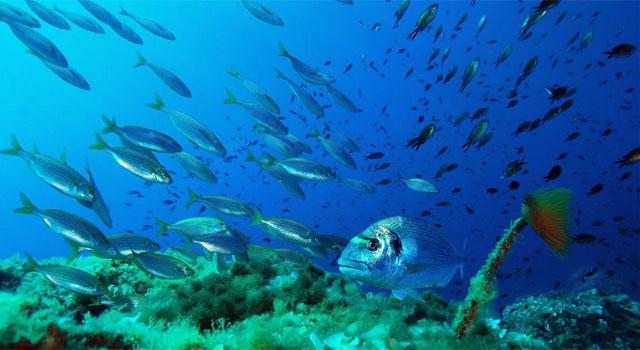 Argentario underwater world, Tuscany