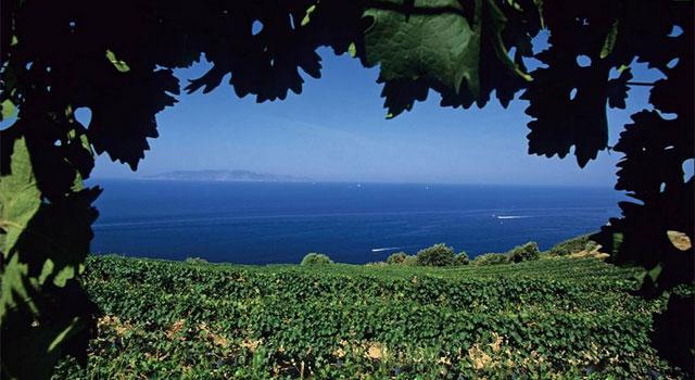 Monte Argentario vineyards, Tuscany