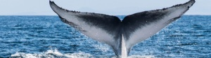Whale in the Argentario, Maremma Tuscany