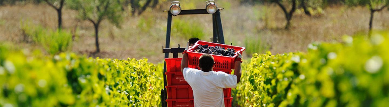 Monteverro Winery in the Maremma Tuscany