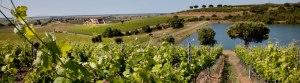 Le Mortelle vineyards & winery, Tuscany