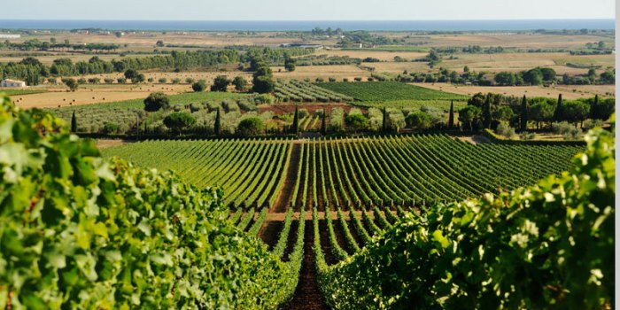 monteverro-winery