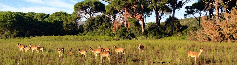 Deer at Feniglia Reserve - image from thetraveljam.com