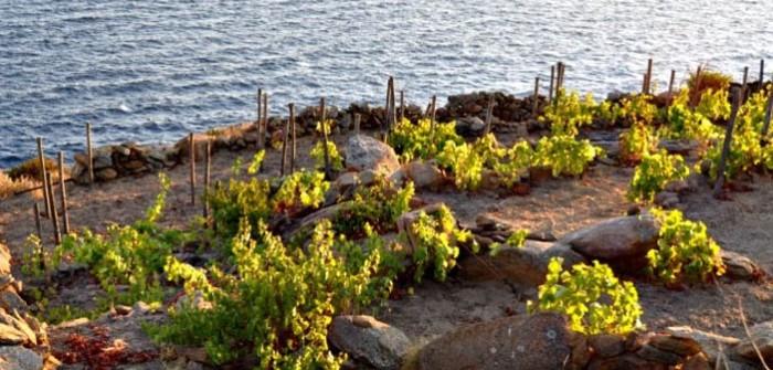 Ansonica Wine Tuscany Argentario