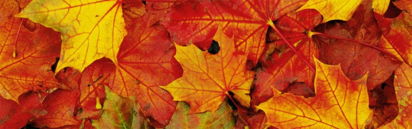 Autumn in Maremma Tuscany